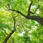 Salud y medio ambiente